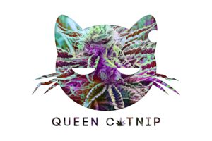 """Queen Catnip Logo. Cat with dazed eyes, crumpled whiskers and a bite out of one ear. Queen Catnip is written in text with a cannabis leaf in stead of the letter """"a"""". Logo and Queen Catnip text is filled in with multicolor cannabis bud photo, background is white."""